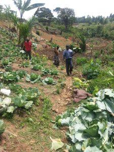 Bukoba Community Garden Haverst4